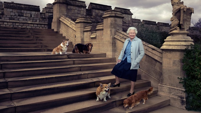 the queen dogs